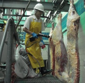 Meat Processing and Packing Factories